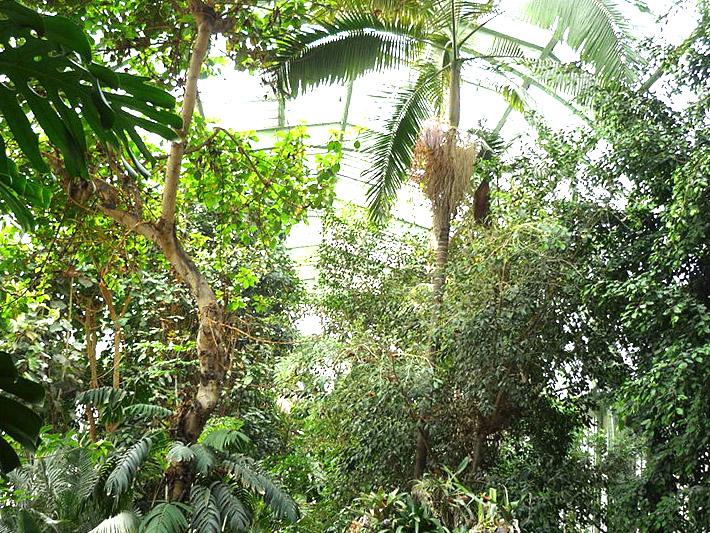Jardin des plantes paris gratuit pour les ch meurs et - Jardin des plantes aix les bains ...