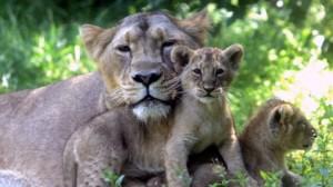 zoo de Mulhouse gratuit